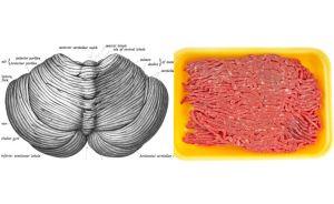 cerebellumbeef